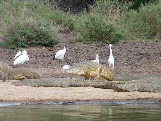 Crocodiles sighting at Nairobi National Park during our Day Trip Nairobi National Park Tour