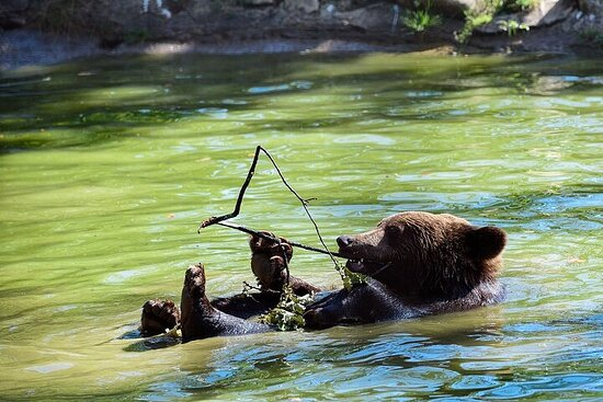 Libearty Bears Sanctuary & Dracula...