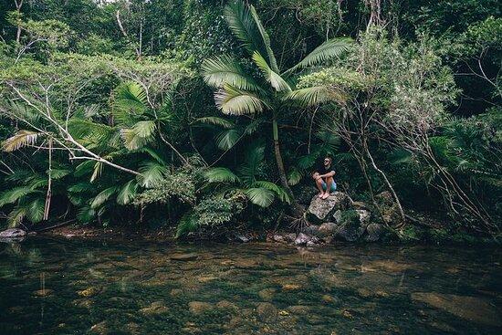 熱帯雨林と滝|エコ体験|アーリービーチ、ウィッ...