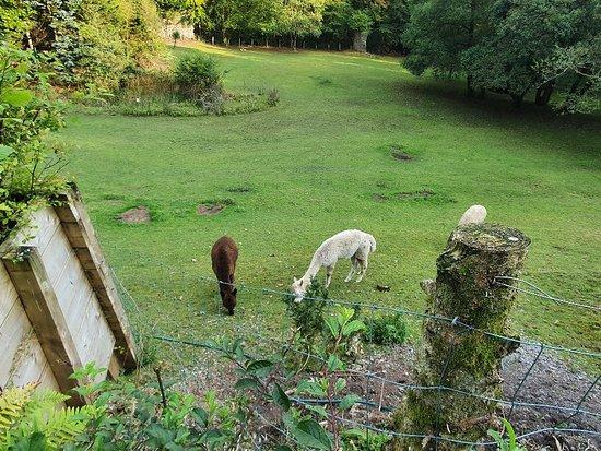 Llandybie Foto