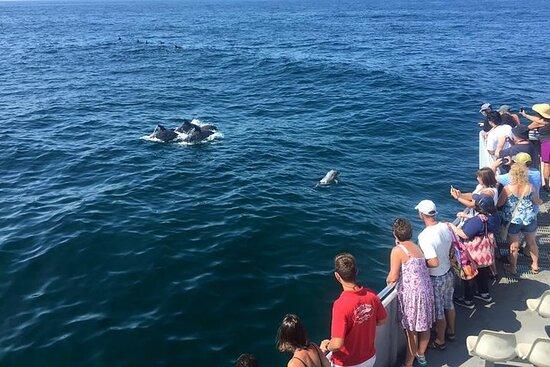 Delfinbeobachtung um Cape May