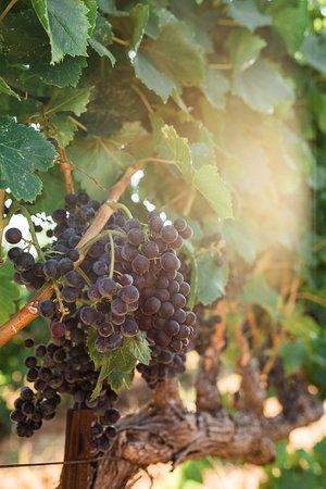 Abbot's Passage Winery & Mercantile in Glen Ellen