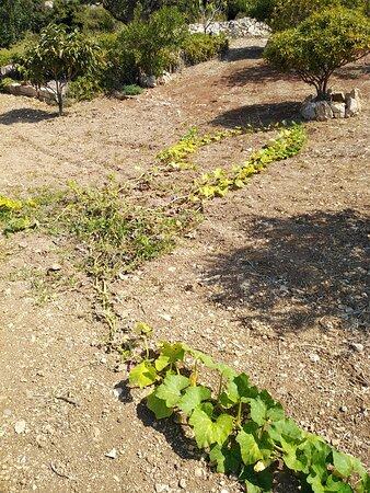Λιβάδι, Ελλάδα: Το μέρος του κήπου με τα κηπευτικά