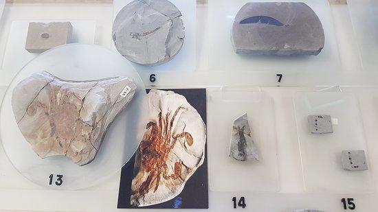 Wittelsheim, France: Collection de fossiles