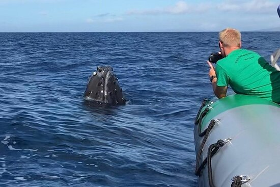 Whale Watching Experience