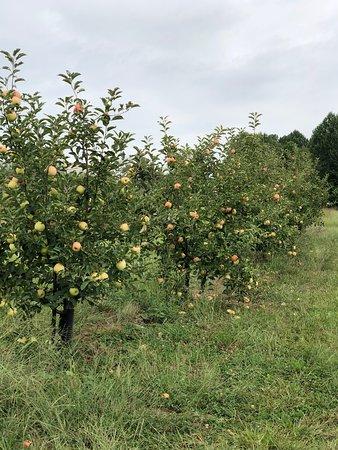 Hazel Green, AL: Scott's Orchard