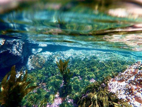 Te Wharawhara Marine Reserve