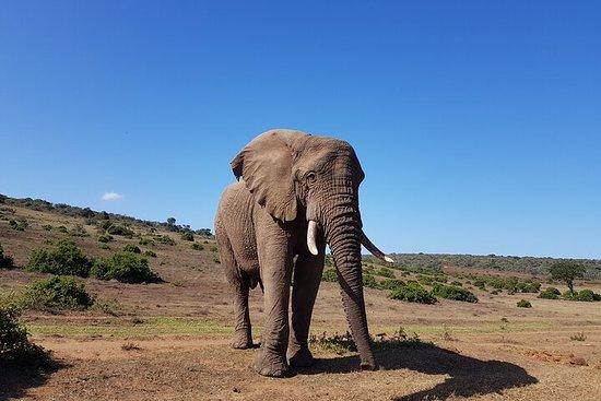 Addo Half Day Safari