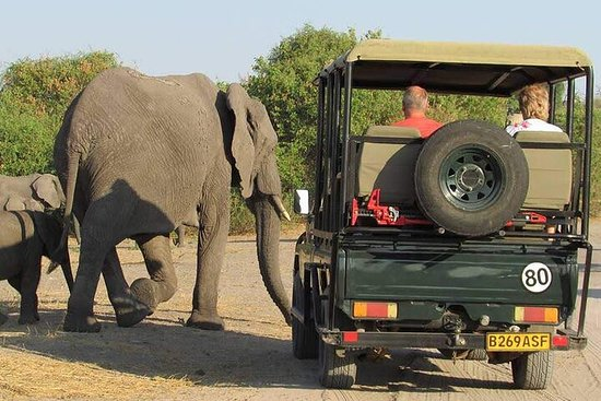 3-Day Guided Tour in Chobe Natural...