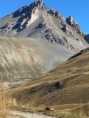 Argentera, Taliansko: Marmotte al col de Larche