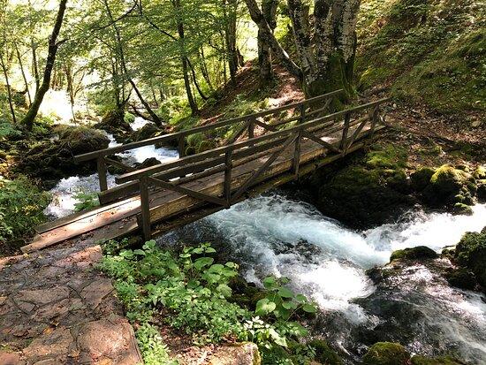 Tara Springs Park