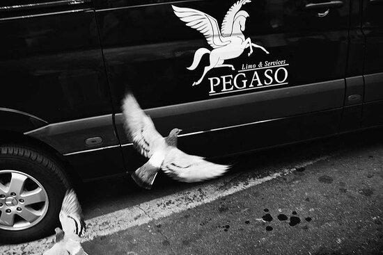 Pegaso Limo & Services