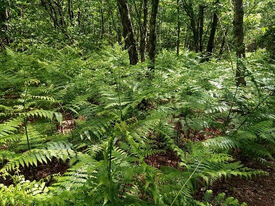 La Forêt Domaniale de Montmorency