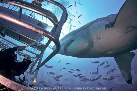 Rodney Fox Shark Expeditions