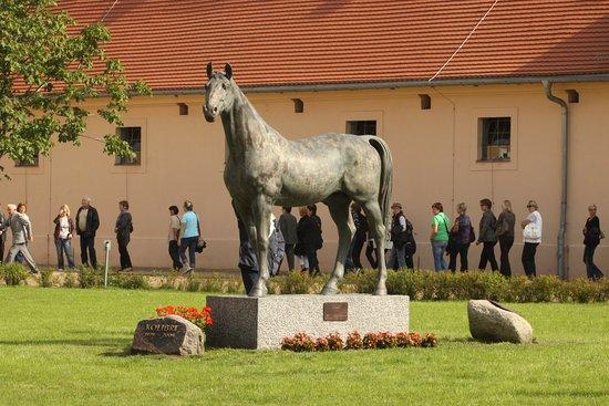 Neustadt (Dosse), Deutschland: Führungen: Entdecken Sie die Neustädter Gestüte auf geführten Rundgängen und erfahren Sie mehr über die Historie, die Pferdezucht und die berühmtesten Pferde.