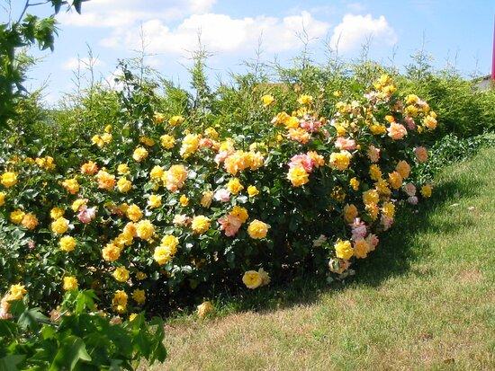 De Rose En Rose