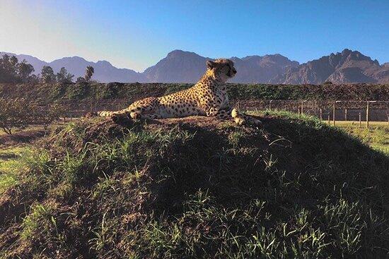 Winelands - Wine/Brandy, Cheetahs ...