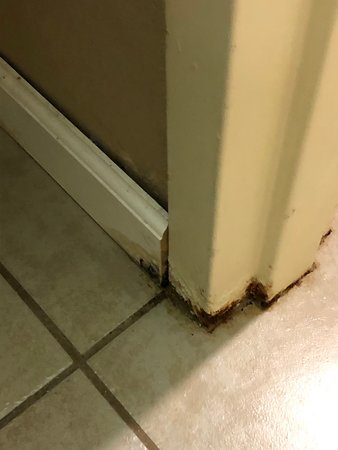 mold on tile and doorframe