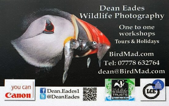 Lincolnshire, UK: Dean Eades Wildlife Photography One to one's and tours
