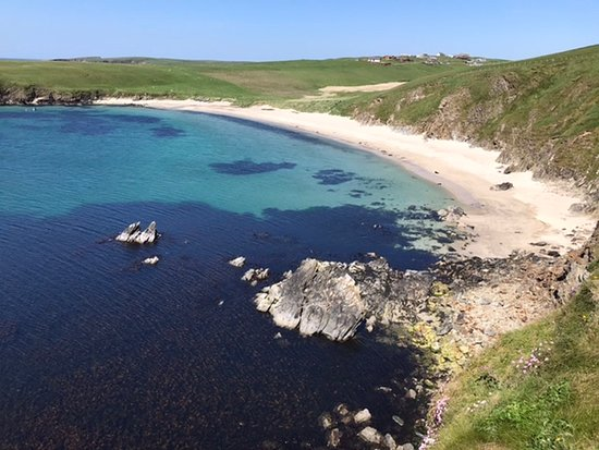 Bigton, UK : Spiggie Beach - seals on the north side of the Bay of Scousburgh