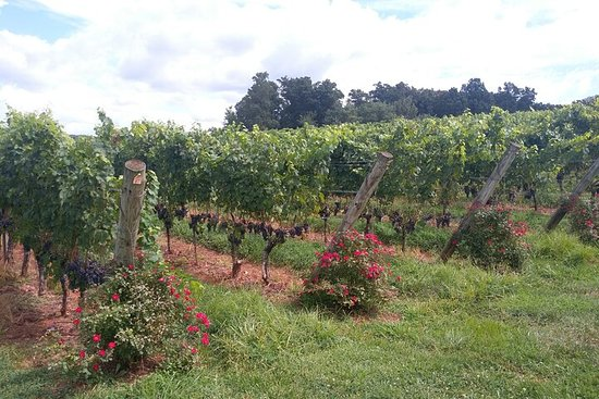 Private Wine Tours (Minimum of 2 and Maximum of 6 people)