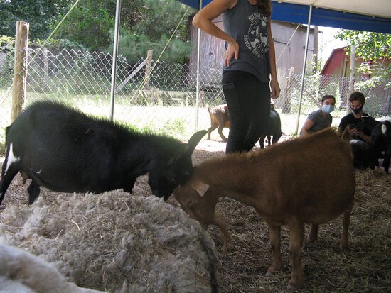 Hux Family Farm