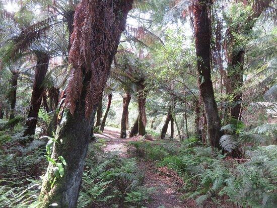 Paradise Picnic Reserve