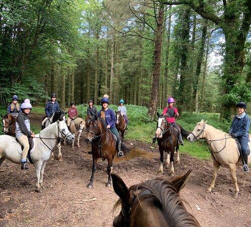 Pine Lodge Riding Holidays