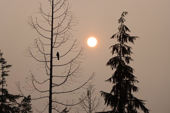 The Steller Jay enjoys the morning sunrise.  As our guides and guest also enjoy the begining of the day and the many varieties of beautiful birds here on the Sunshine Coast.  We call the Steller Jay the s-kash s-kash.