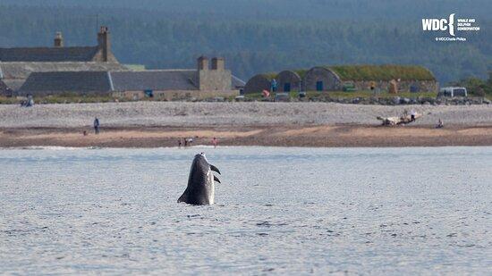 WDC Scottish Dolphin Centre
