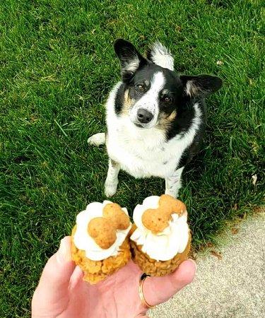 Pup waiting pupcake