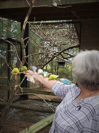 Scotland Neck, NC: Love those parakeets!