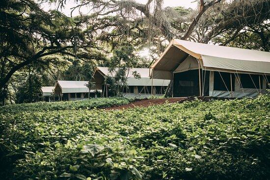 Ngorongoro Tortilis Camp