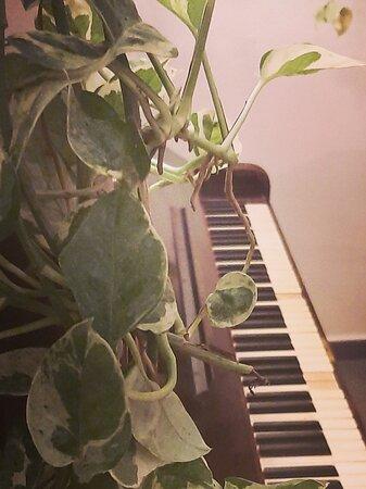Botanico Piano