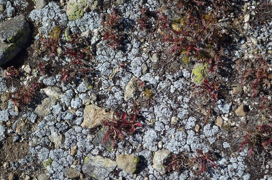 Rollinsville, CO: Tundra vegetation