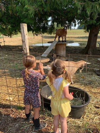 Bushue Family Farm & Nursery