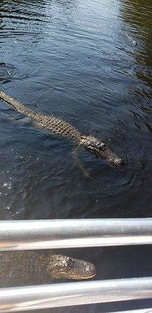 LaPlace, LA: Sooo many alligators!! Great tour with Captain Bishop!!