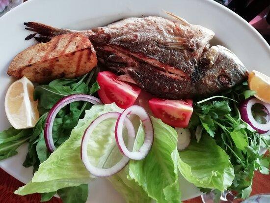 Fish, seabreambus