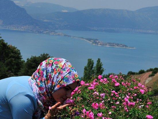 Isparta Province, Turkey: İsparta Gül bahçeleri Mayıs- Haziran Güneykent Sorkuncak