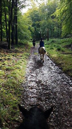 Blagdon, UK : Beautiful woodland tracks