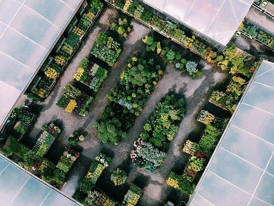 Premier Plants Of Ledsham