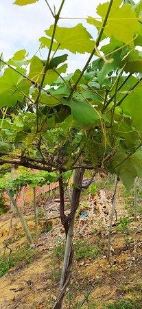 Vinícula Ziviani é muito mais que apenas vinhos.
