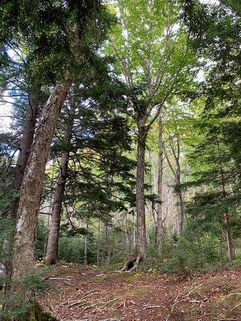 Ben Eoin Provincial Park