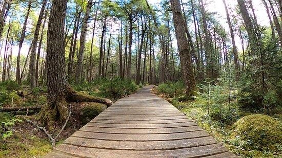 Kejimkujik National Park Foto