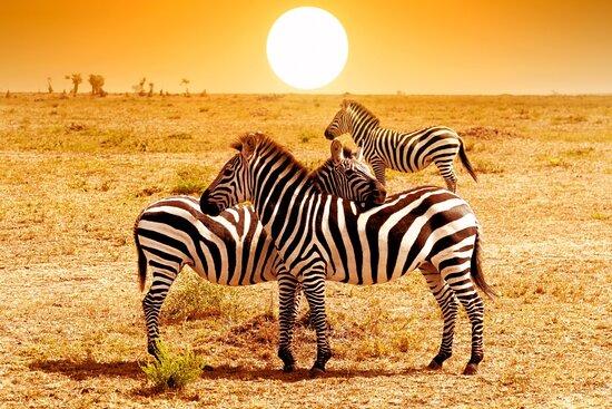 Moran Safaris