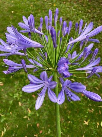 lily garden spa uppsala