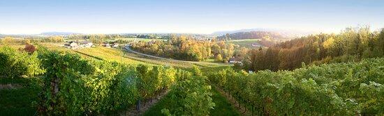 Eferding, Österreich: Blick vom Weinberg auf das Weingut und Hilkering, Foto © Weingut Aichinger