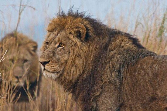 Mara North Conservancy Foto