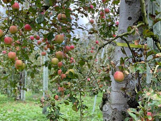 沼田インター近くでりんご狩り
