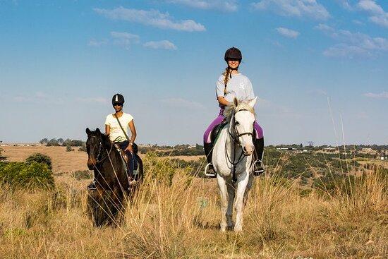Passeggiate a cavallo per piccoli gruppi a Muldersdrift